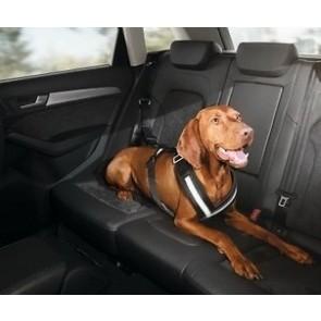 Correa de seguridad para perros. Talla S